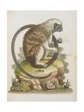 Lion-monkey Giclee Print