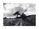 Roman Road, Ceiriog Drovers Roads, Wales Giclee Print