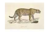 A Jaguar Giclee Print by  Werner