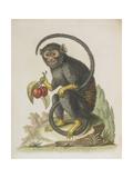 Monkey Giclee Print