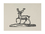 A Stag With Antlers Giclee Print by Thomas Bewick