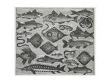 Assorted Fish Giclée-Druck von Isabella Beeton