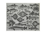 Assorted Fish Giclee Print by Isabella Beeton