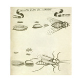 Insects Giclee Print