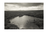 Altna Breac, Flow Country, Caithness 1988 Our Forbidden Land Series Giclee Print by Fay Godwin