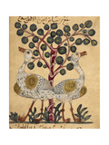 Two Ostriches Giclee Print by Aristotle ibn Bakhtishu