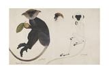 White Monkey. Black Monkey. Common Langur, Hanuman Langur Giclee Print