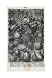Fruta Lámina giclée por Isabella Beeton