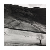 Boardale, Cumbria 1982 Giclee Print by Fay Godwin