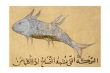 Germon Giclee Print by Aristotle ibn Bakhtishu