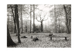 Speech House, Woodland Picnic Place 1985 From the Forest Of Dean Series Giclee Print by Fay Godwin