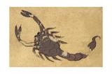 Scorpion Giclee Print by Aristotle ibn Bakhtishu