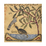 Turtle Catching a Bird Giclee Print by Aristotle ibn Bakhtishu
