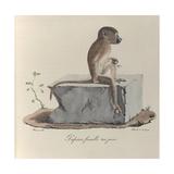 a Papion Monkey Giclee Print