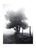 Tree in Mist Near Rivilen 1990 Drovers Roads, Wales Giclee Print by Fay Godwin