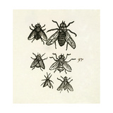 Six Insects Giclee Print