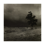 Tree With Sheep, Mist and Low Cloud Giclee Print by Fay Godwin