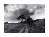 Roman Road, Ceirieg (Vintage) Drovers Roads, Wales Giclee Print by Fay Godwin