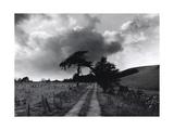 Roman Road, Ceirieg (Vintage) Drovers Roads, Wales Giclee Print by Fay Godwin