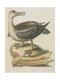 The Albatross Giclee Print