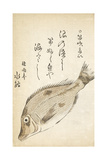 A Fish Giclee Print by Katsuma Ryusai