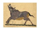 Boar Giclee Print by Aristotle ibn Bakhtishu