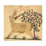 Deer Giclee Print by Aristotle ibn Bakhtishu