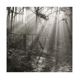Fence, Parkland Woods 1985 From the Secret Forest Of Dean Series Giclee Print by Fay Godwin