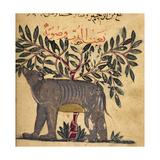 A Bear Giclee Print by Aristotle ibn Bakhtishu