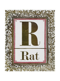 Letter R: Rat. Gold Letter With Decorative Border Giclee Print