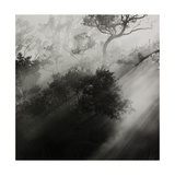 Light Shafts Shining Through Trees Giclee Print by Fay Godwin