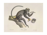 A Female Monkey Giclee Print