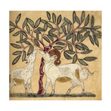 Ram and Ewe Giclee Print by Aristotle ibn Bakhtishu