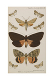 New Species Of Indian Butterflies Giclee Print