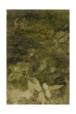 Blurred Image Of Flowers Giclee Print by Fay Godwin