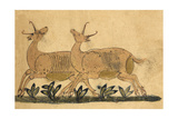 Two Gazelles Giclee Print by Aristotle ibn Bakhtishu
