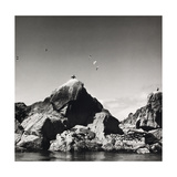 Shags, Western Rocks 1977 From Scilly Isles Series Giclee Print by Fay Godwin