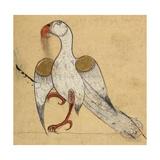 Egyptian Vulture Giclee Print by Aristotle ibn Bakhtishu