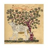 A Hyena Giclee Print by Aristotle ibn Bakhtishu