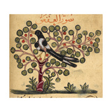 Magpie Giclee Print by Aristotle ibn Bakhtishu