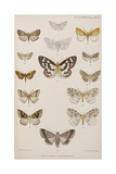 New Species Of Indian Butterflies Giclee Print