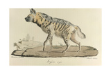 A Striped Hyena Giclee Print
