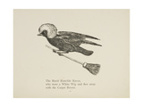 Raven Flying On a Broom, Nonsense Botany Animals and Other Poems Written and Drawn by Edward Lear Giclée-Druck von Edward Lear