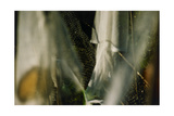 Plants Growing Under Netting Giclee Print by Fay Godwin