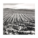 Snow Landscape Drained For Forestry, in Lairg 1989 Giclee Print