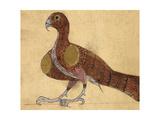 Eagle Giclee Print by Aristotle ibn Bakhtishu