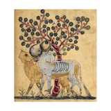 Bull and Cow Giclee Print by Aristotle ibn Bakhtishu