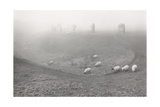 Avebury, Mist With Sheep 1989 Giclee Print by Fay Godwin