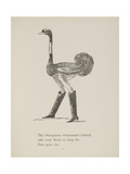 Ostrich Wearing Boots From a Collection Of Poems and Songs by Edward Lear Giclee Print by Edward Lear