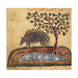 Indian Hedgehog Giclee Print by Aristotle ibn Bakhtishu